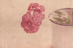 flower cup (RL Mulholland) Tags: pink flowers texture cup vintage soft faded layers 1855mm tones tabletop textured lesbrumes canoneos600d rebelt3i