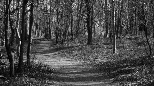 Winding Woodland Walk 8847_BW