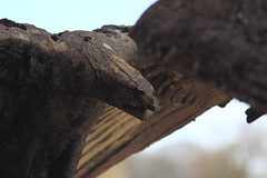 Where Eagles Dare.. (BoyWonder1708) Tags: sculpture statue canon eagle national stourhead trust 500d