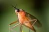 Mug/Mosquito (stormchaseroosteeklo) Tags: macro closeup mosquito mug photographyforrecreation me2youphotographylevel2 me2youphotographylevel1