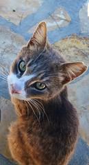 _Dolcezza felina_ (Gaia.Federico) Tags: light white color verde cat eyes occhi sguardo greece grecia felino miao colori gatto bianco luce dolcezza oro patmos baffi
