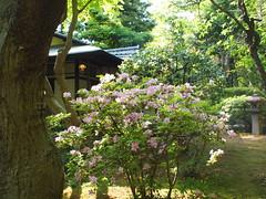 P4291437.JPG (abiys730804) Tags: tokyo furukawateien 2013 eyefi 20130429