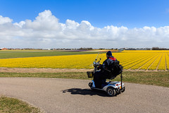 Touring Holland (Maria_Globetrotter) Tags: road old travel flowers plant man flower holland tourism netherlands dutch yellow rural canon wonderful landscape countryside spring big perfect colorful europe day colours power tulips cloudy postcard nederland landmark visit off national plantation stunning planet record huge fields flowering late lonely typical gigantic bomb retired blommor majestic alkmaar beaten iconic paysbas pases geographic bloemen gul jalopy perennial  holand vr lightroom bloem bonanza   bajos nederlnderna 650d 1585  mariaglobetrotter