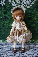 Peemai in Brown (Eak_F) Tags: candycane rosenlied limitedchocolat