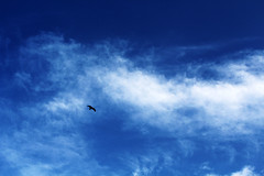eye in the sky (online22Naveen) Tags: blue sky cloud bird eagle skyblue whitecloud