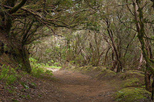 forest trail in Anaga - Tenerife