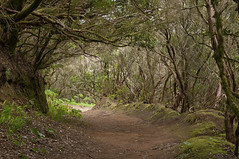 forest trail in Anaga - Tenerife (Francis Jimnez Meca) Tags: road park autumn red brown mist tree green fall tourism nature beautiful leaves yellow fog forest woodland landscape outdoors golden maple alley woods scenery natural bright hiking path branches perspective foggy scenic trails peaceful scene hike foliage trail walkway lane environment canopy habitat visitor footpath