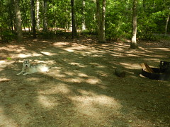 Our Pet-Friendly Campsite (Christine_Ray) Tags: new pine forest state reserve national jersey pinelands barrens belleplain belleplaincapemayandparvin