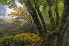 Autumn Mist (David Gn Photography) Tags: park morning travel autumn trees red plants mist green nature colors yellow japan fog stone oregon garden season portland landscape asian botanical early moss foggy japanesemaple pacificnorthwest northamerica pdx lantern portlandjapanesegarden bushes pnw shrubs touristattraction usaunitedstates