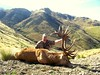 New Zealand Red Stag Hunting - Christchurch 47