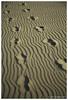 New Zealand: the path (Karl von Moller) Tags: sunset beach landscape dramatic karekare karekarebeach