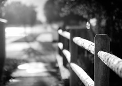 let's take a walk - 239/366 (auntneecey) Tags: fence fencefriday lightiseverything 366the2016edition 3662016 day239366 26aug16