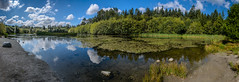 Green Timbers Pano (Sworldguy) Tags: surrey greentimberspark green reflections public park clouds ducks lake marsh environment natural nature landscape trails shoreline britishcolumbia canada scenic ripples waterscape serene