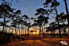 It's not the savana (Fakeye) Tags: savana france forest sea blue orange sunset sun evening coucher soleil foret mer ocean summer magic