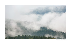 September morning (Callegher Marco - The beauty in my eyes) Tags: fog foggy nebbia nebbie atmosfera land landscape paesaggio trees tree cansiglio alpago belluno prealps morning september