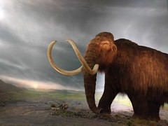 The mammoth at the Royal BC Museum (Ruth and Dave) Tags: royalbcmuseum victoria naturalhistory exhibit museum mammoth model backdrop landscape iceage