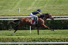20160820_SaratogaRC_0161.jpg (cct77gjj) Tags: horses newyork saratoga saratogaracecourse saratogasprings thoroughbredhorseracing oscarperformance joselortiz