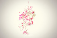 Nature's Mask (Paper Meadows Photography) Tags: multipleexposure doubleexposure girl face portrait nature photoshopelements creativeedit artistic