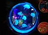aquarium (jolanta mazur) Tags: aquarium water jellyfish aquaticlife woman circle geometry pattern