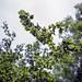 Summer branches - part 7