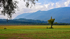 Im Murnauer Moos (MH *) Tags: weide baum wald berg mountain meadow tree murnau moos d7200 color farbe bayern oberbayern bavaria alpen moor