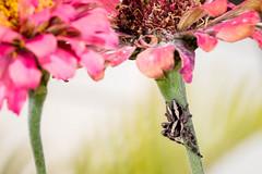 IMG_1723-2 1200 (Macrophotography and Close-up) Tags: flower flores bugs insetos insects macro closeup macrofotografia macrophotography jardim gardem nature natureza vida silvestre wildlife spider butterflies ladybug animal inseto ao ar livre