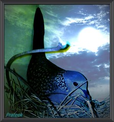 Being a mother is toughest job.. (prateek_tandon89) Tags: bird mother beautifulbird