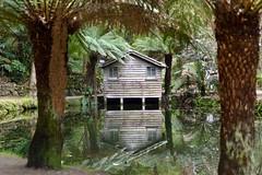Alfred Nicholas Gardens Lake (silverwine) Tags: alfrednicholasgardens garden lake reflection shack ferns gardens parks victoria dandenongs hut water stillwater ferntree