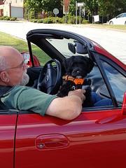 Gabby's Dad and Miata (crisp4dogs) Tags: gabby pwd portuguesewaterdog crisp4dogs bobby miata puppy