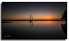 He that climbs the tall tree has won right to the fruit. (Christolakis) Tags: longexposure seascape reflection tree sunrise australia brisbane serenity queensland nudgeebeach 1740f40l bwnd110 canon5dmklll