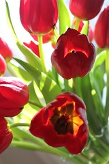 Spring Delight (bigbrowneyez) Tags: light red orange ontario canada yellow gold design intense warm dof tulips bright bokeh gorgeous ottawa rich sunny fresh special gift bouquet colourful lovely elegant fiori fabulous colori belli contrasts artful delightful shadowslight bellissimi eastergift springdelight easterbouquet vigilantphotographersunite