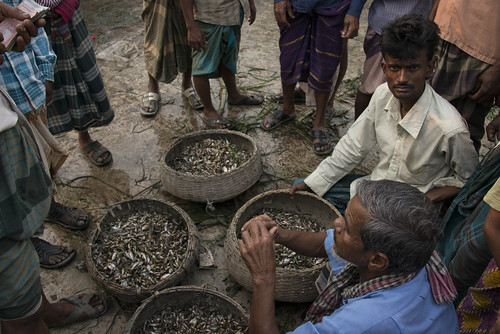 Fish market in Sunamganj, Bangladesh. Photo by Finn Thilsted, 2013.