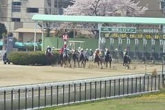 20130405-_DSC4022 (Fomal Haut) Tags: horse japan nikon nagoya 80400mm d4   14teleconverter  d800e