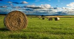 hay (dave 59) Tags: field landscape scotland aberdeenshire hay