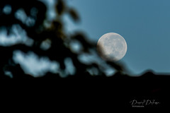 O adeus da Lua (Daniel Dalonso) Tags: moon brasil lua santacatarina paisagens manh joinville luacheia t2i 55250mm