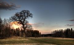 Håbo-Tibble, Sweden HDR (Marc Arnoud Rogier van der Wiel) Tags: sunset sky tree field landscape nikon sweden outdoor serene sverige hdr srb d600 griturn håbotibble
