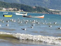 PRAIA DE GAROPABA SC (ecaraujo) Tags: praia sc mar barcos garopaba gaivota