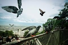 We'll Always Have Paris (dzgnboy) Tags: paris france pigeons montmartre sacrecoeur img3040