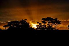 DSC_4391_2012-01-12_20-19 (J Rutkiewicz) Tags: sunset clouds magnolia rays cytryna chmury promienie