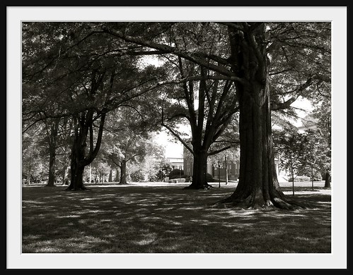 Davidson College: Old Trees