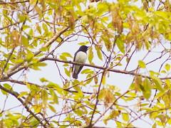 (Polotaro) Tags: bird nature pen olympus  zuiko  4    2013   fzuiko300mmf45 epm2