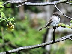 Watch the birdie (howardj47) Tags: canon howardj sx50hs