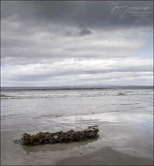 125 - Spring is in the Air (North Light) Tags: sea seaweed beach clouds coast scotland sand caithness skt thurso thursobay