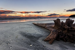 Long Walks (waltmanNZ) Tags: ocean new wood autumn sunset sea sky shells seascape tree beach clouds canon landscape log sand exposure may sigma zealand multiple 1020 waihi drift blend bayofplenty 10mm 2013 60d beacheslandscapes