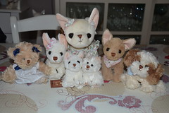 Family Plush Bukowski (Aurelmistinguette) Tags: family famille fluffy plush collection bukowski mignon peluche peluches kawa aurelmistinguette