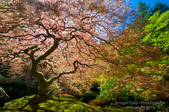 Under That Japanese Maple Tree (Bridget Calip) Tags: park travel red tree green tourism nature statue japan oregon reflections garden portland religious temple japanese maple pond shrine quiet peace buddha buddhist religion trails peaceful buddhism visit calm tourists foliage zen serene paths meditation wisdom spiritual relaxation enlightenment shinto bushes vacations 2013 bridgetcalip