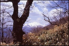 (bensn) Tags: trees mountain snow film grass japan pentax slide velvia 100 limited fa lx asama f19 43mm