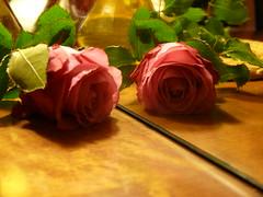 P1090052 (CiasteczkowyPotwor) Tags: róża odbicie róza różowa płatki
