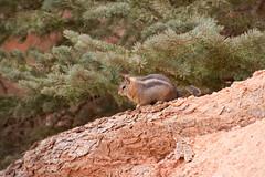 IMG_7908 (hhwilhelm) Tags: usa america utah us unitedstates unitedstatesofamerica northamerica brycecanyon brycecanyonnationalpark
