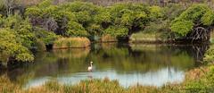 Landscape with Flamingo (dtredinnick13) Tags: flamingo galapagos puntomoreno green lake lush oasis bird birding water galapagosislands